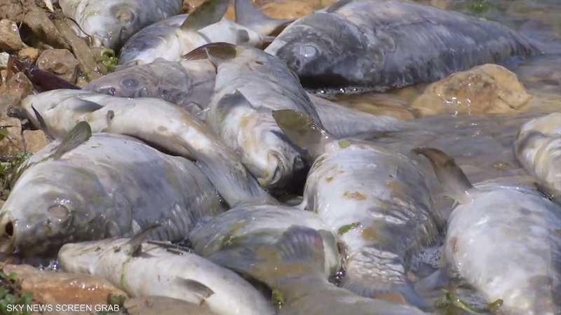 نفوق ملايين الأسماك في بحيرة القرعون شرقي لبنان