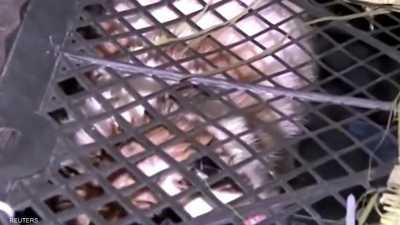 """بالفيديو.. مجزرة حيوانات في الصين بسبب """"علب المفاجآت"""""""