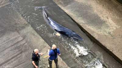 الحوت الصغير ضل طريقه ودخل نهر التايمز