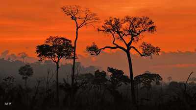 غابات الأمازون تتآكل بشكل غير مسبوق.. وتحذير من خطر قادم