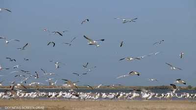 حوض آرغين في موريتانيا.. جنة الطيور والأسماك