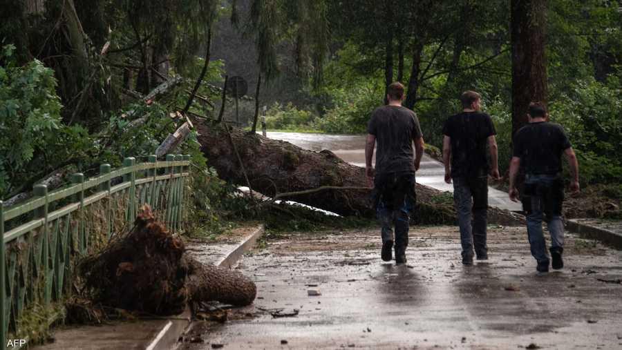 الرياح القوية اقتلعت أشجارا عملاقة من جذورها