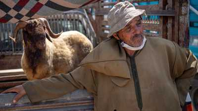 """أضاحي العيد في المغرب.. ارتفاع """"مقلق"""" في الأثمنة"""
