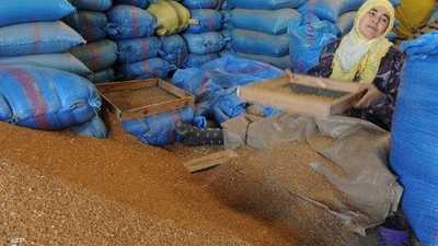 المغرب يحقق ثاني أعلى محصول حبوب في تاريخه