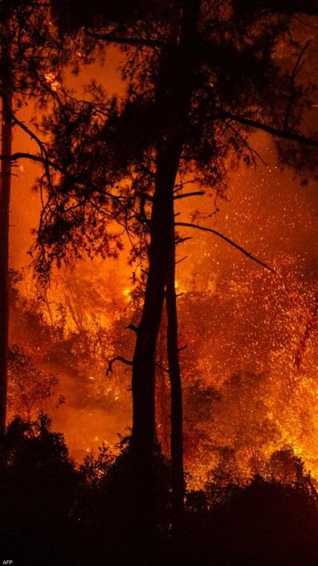 في واحدة من أسوأ الكوارث البيئية على الإطلاق، يتواصل اندلاع حرائق الغابات في منطقة شرق البحر المتوسط، من تركيا إلى اليونان وإيطاليا.
