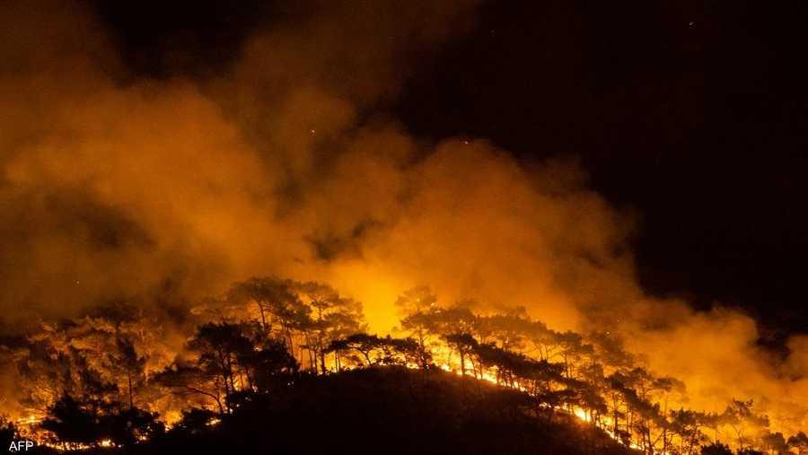 الحرائق تندلع بين وقت وآخر في بُقع مختلفة ومتناثرة من هذه الغابات الساحلية، ولأسباب مجهولة حتى الآن.