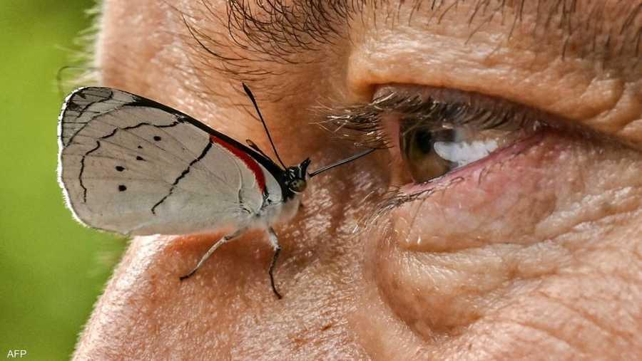 ساهمت صور خوان في توثيق كون كولومبيا البلد الذي يضم أكبر مجموعة متنوعة من أنواع الفراشات في العالم.