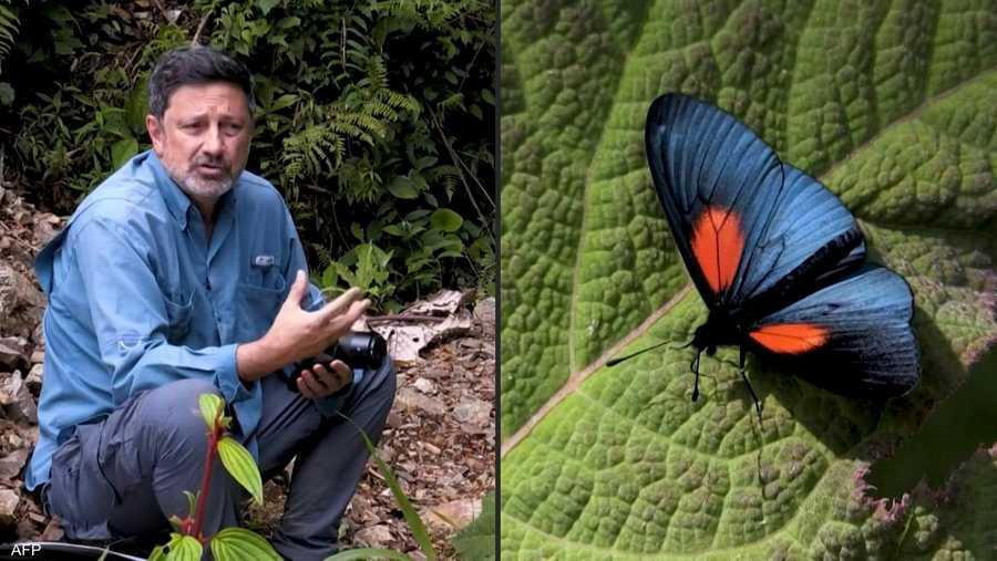تحتوي كولومبيا على 3642 نوها مختلفا من الفراشات، تشكل 19.4 في المئة من الأصناف العالمية المعروفة من هذه الحشرة.