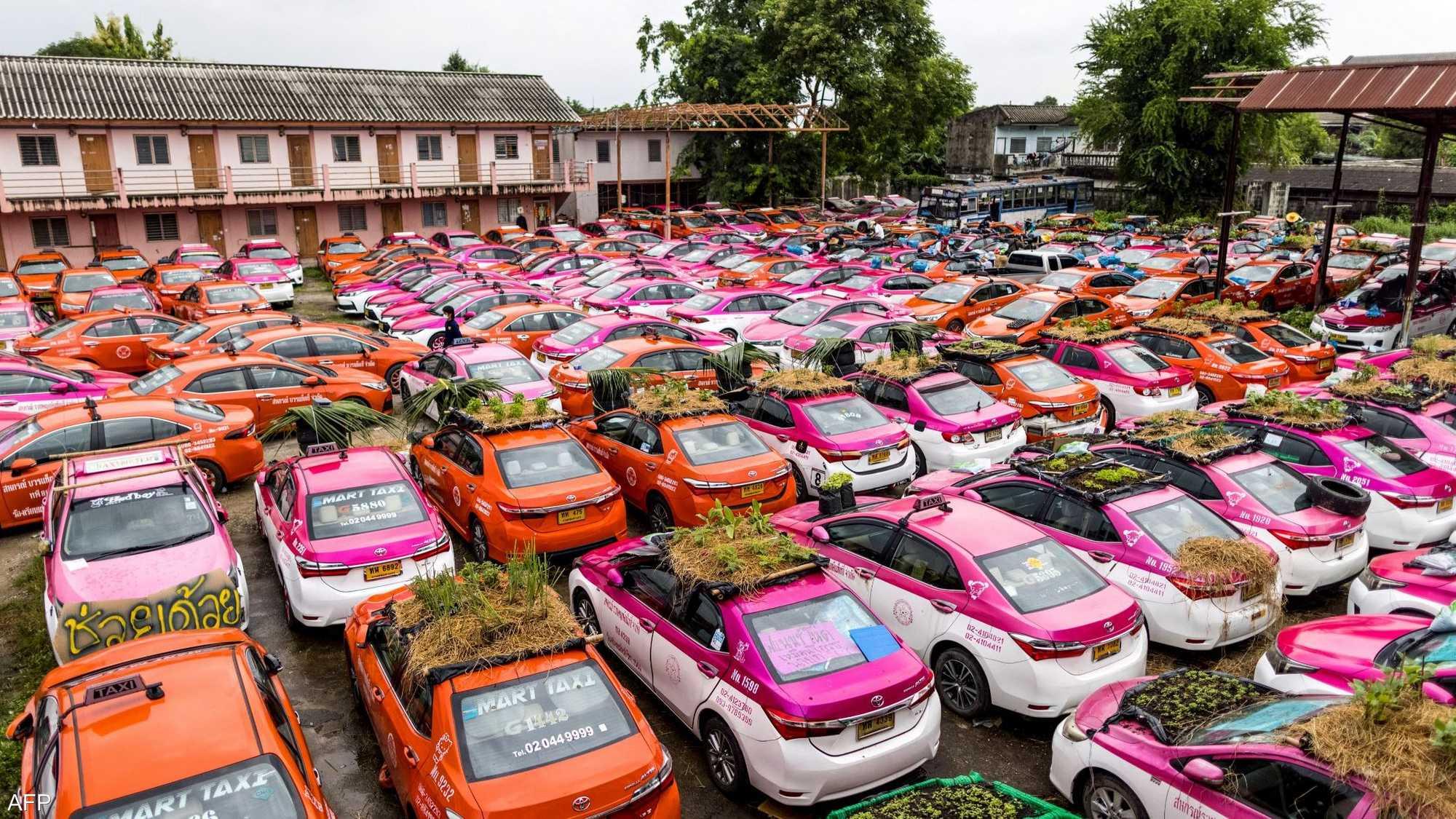 سيارات أجرة خاملة تحول أسقفها لحدائق صغيرة 1-1464304