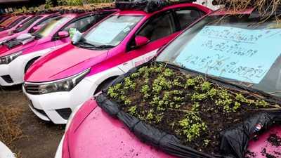 سيارات أجرة خاملة تحول أسقفها لحدائق صغيرة