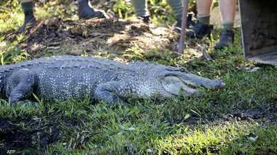 جدة شجاعة تنقذ شخصا من هجوم تمساح عملاق