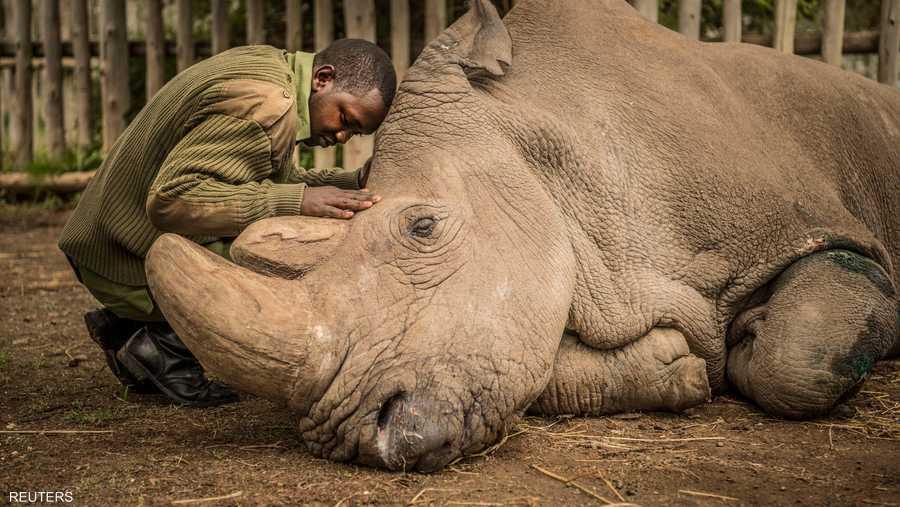 آخر لحظات وحيد القرن سودان