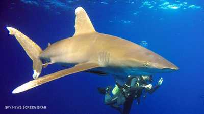 لماذا يهاجم القرش الإنسان؟.. باحث مصري يكشف سببين